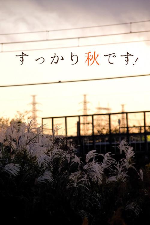 Ppg_senrotosusuki500